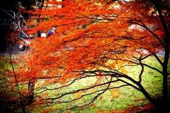 27343__autumn-still-lingers_p