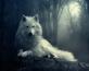 75d30-651807-1280x1024-wolf-in-the-dark