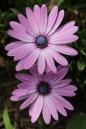 flower-1970661_960_720