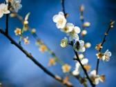 flowers-hd-wallpaper-widescreen-9916