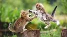fotos hd de dos gatos